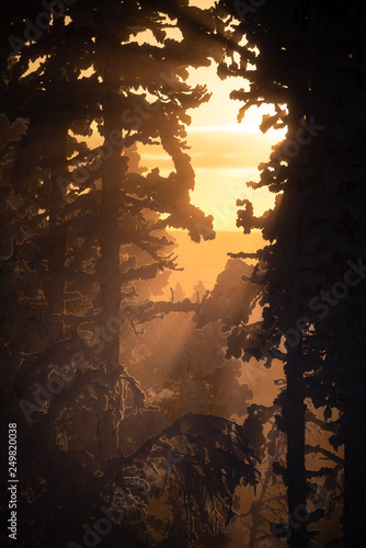 Recess Fitting Deep brown Silhouette of frost and snow covered trees in taiga aka boreal forest at winter against golden sunset with sunrays through mist in Levi ski resort in Kittilä, Finland