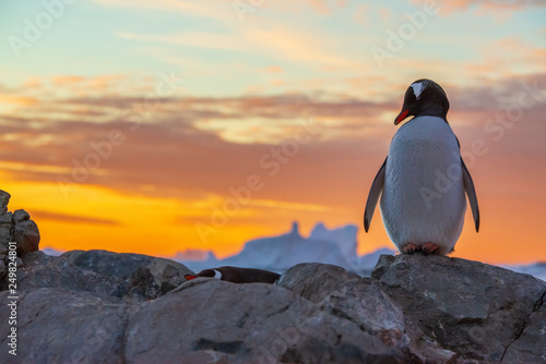 Photo sur Toile Pingouin penguin in antarctica