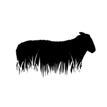 Illustration Of Sheep Icon In ...