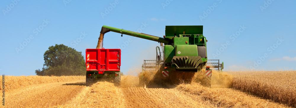 Fototapety, obrazy: Moisson dans un champ de blé en été