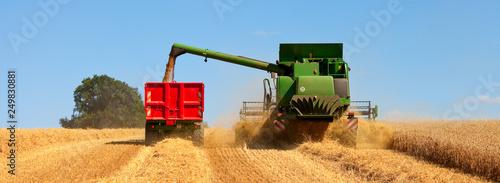 Moisson dans un champ de blé en été Canvas Print