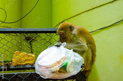 Una scimmia mangia dalla spazzatura mundizia tailandia Canvas Print