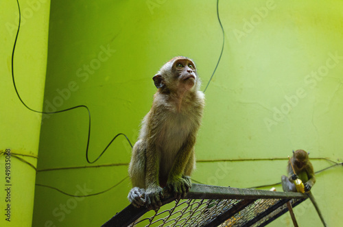 Photo  una scimmmia tailandia Phra Nang cave monkey beach