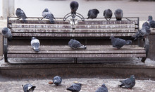 Pigeons On The Bench Of The City Park.