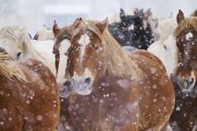 雪の中走る馬