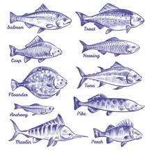 Hand Drawn Fishes. Ocean Sea R...