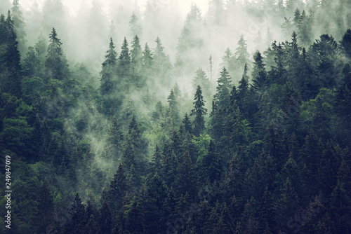Misty mountain landscape - 249847019