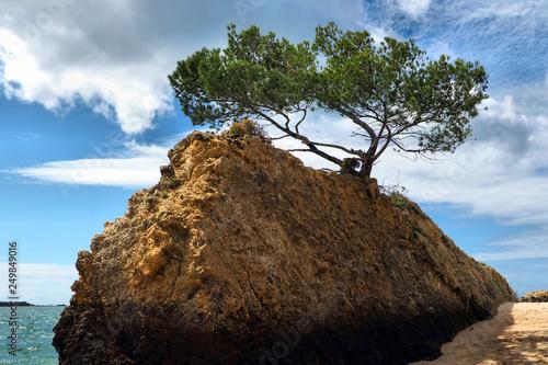 Foto  Rock Tree Scenic.
