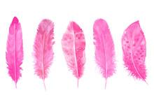 Hand Drawn Watercolour Bird Pink Feathers Set Vibrant Illustration.