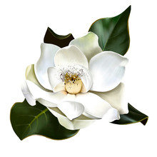 Delicate White Magnolia, With Green Leaves With A Highlight, With Spray Paint Elements, Close-up On A White Background, Like A Logo Or A Greeting Card