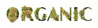 canvas print picture - Cut out word ORGANIC with growing plant inside. Bio production concept