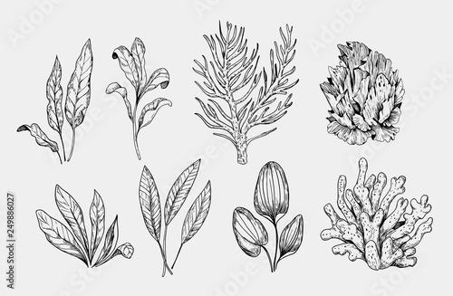 Fotografia Set of aquarium plants