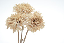 Brown Dried Flowers On A White...