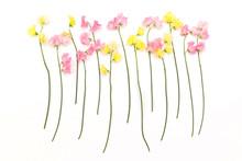花のフレーム Beautiful Flowers Of The Frame