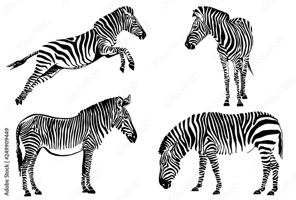 Fototapety, obrazy: Graphical set of zebras isolated on white background,vector sketch for tattoo and design