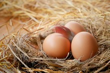 Sunlight On Surface Of Three Brown Eggs With Chicken Feather In Hay Nest With Straw On Wooden Plank Background, Close Up And Blurred Background