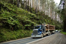 Logging Truck On A Road Through A Temperate Rainforest Near Melbourne In Victoria, Australia