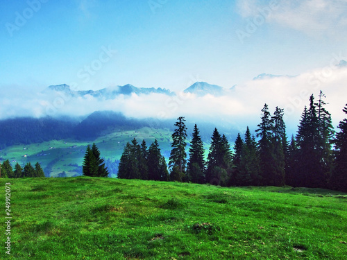 Foto auf AluDibond Grun Trees and evergreen forests on the slopes Churfirsten mountain range in the Toggenburg region - Canton of St. Gallen, Switzerland