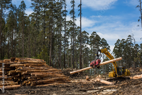 Fotografering View of forestry equipment moving timber at a coupe in Victoria Australia