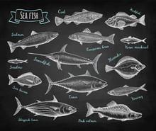 Fish Big Set On Blackboard.