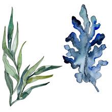 Algae And Blue Aquatic Underwa...