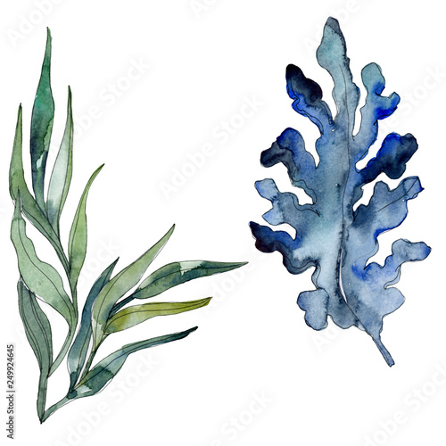 Algae and blue aquatic underwater nature coral reef isolated element. Watercolor background illustration set.