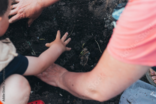 women's hands plant the root in the ground with water, the