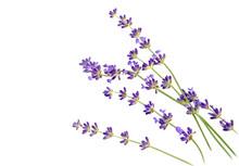 Sprigs Of Lavender On White Ba...