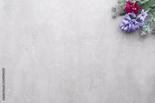 Fototapeta Winter background with seasonal flowers - blue hyacinth and burgundy chrysanthemum obraz na płótnie