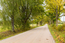 Country Road With A Treeline O...