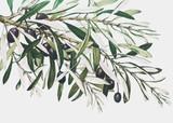 Gałązka oliwna na kartce bożonarodzeniowa - 249958866