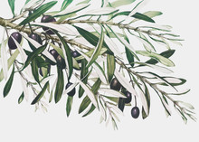 Olive Branch On A Christmas Card