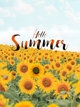Text Hello Summer With Sunflow...
