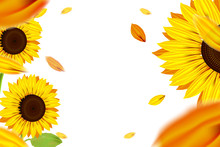 Sunshine And Bokeh With Yellow Sunflower And White Background
