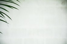 Palm Leaves On White Wall Background ,copy Space For Text