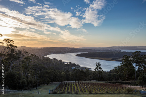 Obraz Sunset over the Tamar valley in Tasmania, Australia,  with a vineyard in the foreground - fototapety do salonu