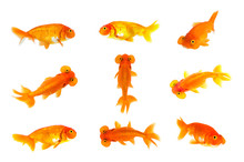 Group Of Goldfish And Bubble E...