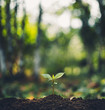 Plant Trees concept in the forest With morning light and back bokeh Beautiful nature
