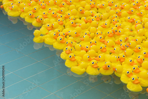 Stampa su Tela yellow toy duck floating in swimming pool