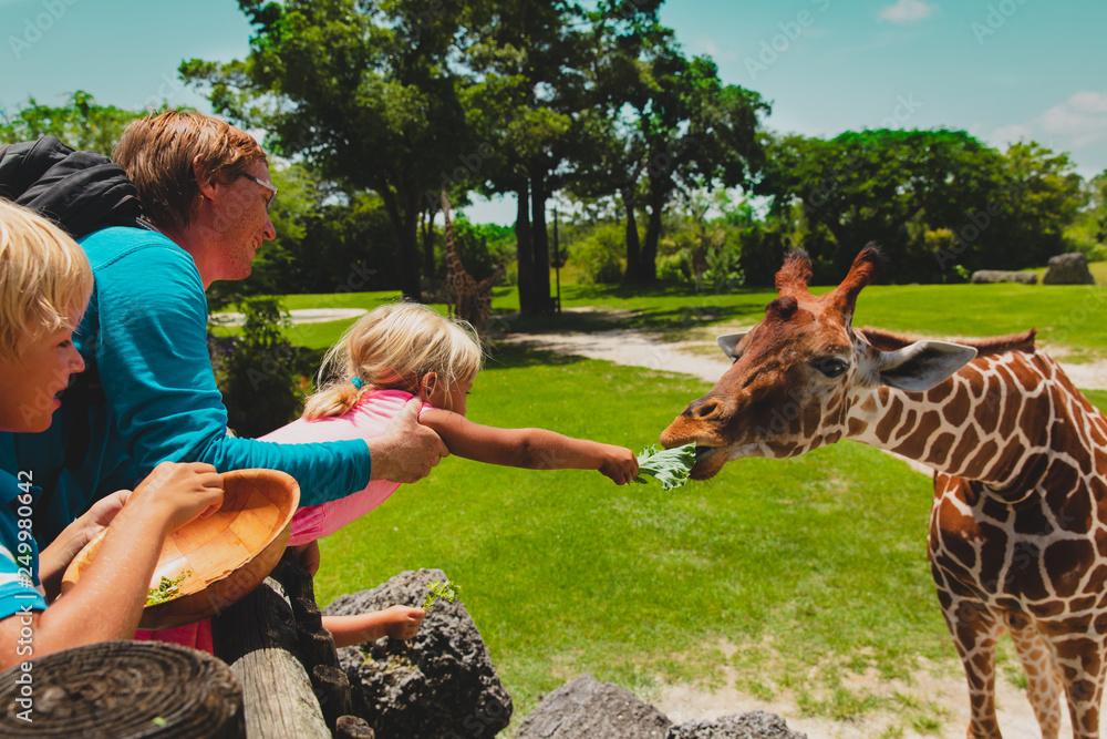 Fototapeta father and kids feeding giraffes in zoo