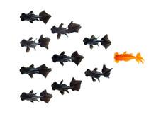 One Goldfish Following Group O...