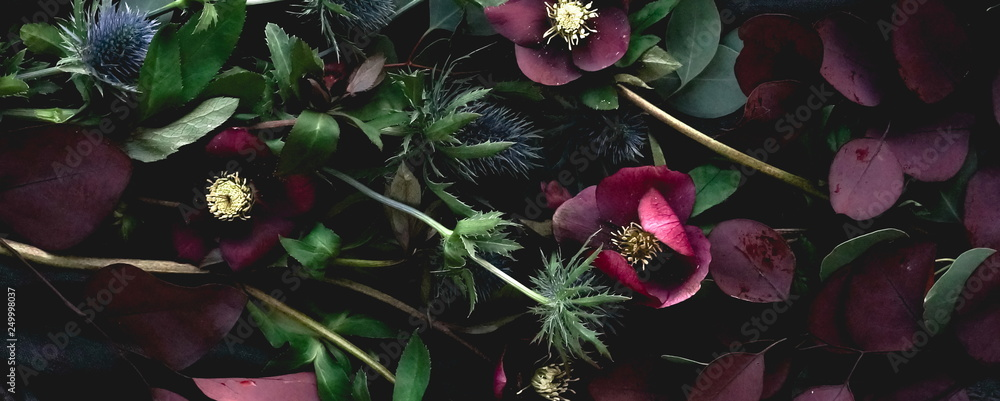 Fototapeta Flowers composition background banner. Bouquet of purple flowers Helleborus on a dark background. Low key.top view.