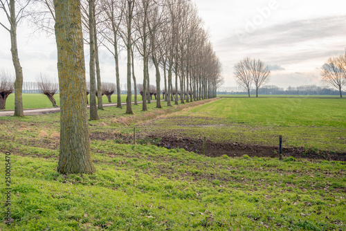 Photo Dutch polder landscape with tall poplar trees and pollard willows along a country road