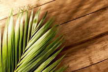 Palm Sunday Concept