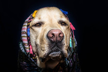 Retrato De Un Perro Hechicero