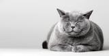 Fototapeta Zwierzęta - Sleepy smiling cat laying on the floor.