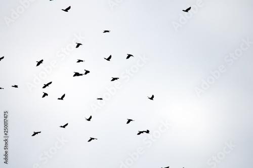 Photo Stands Bird flock of birds flying in the sky