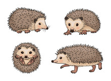 Cute Hedgehogs - Vector Illustration