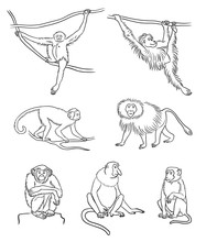 Set Of Different Monkeys In Co...