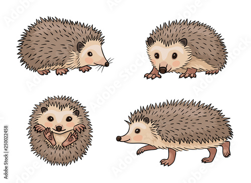 Photo  Cute hedgehogs - vector illustration
